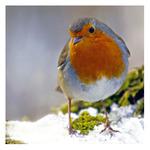polite, ready-basted bird-er Avatar